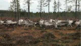 Aatsinki - The Story of Arctic Cowboys traileri