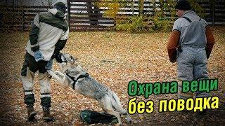 Обучение собаки на охрану вещи | Чехословацкий влчак