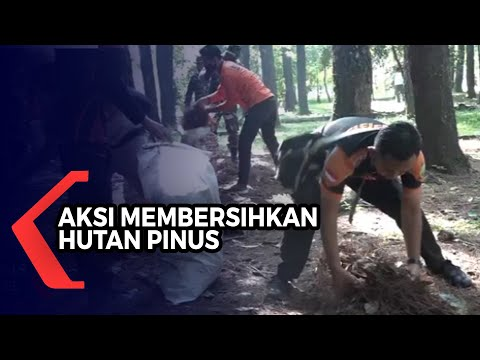 aksi membersihkan hutan pinus edukasi agar masyarakat peduli lingkungan