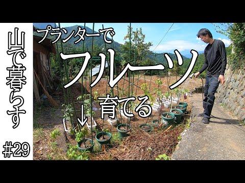 , title : 'フルーツ 栽培 する!ベリー類、プルーン、プラム、アンズ、イチジク、ブドウを育てる #29 山で暮らす / 田舎暮らし