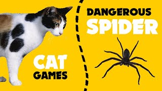 DANGEROUS SPIDER on screen for cats ★ CAT GAMES