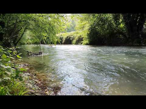 The River - Relaxing River Sounds 4K