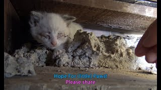 Download Youtube: Hope For (little) Paws - I need a diet so I can crawl into places like this!!!  :-)