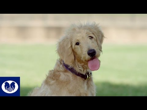 Allstate Commercial (2016) (Television Commercial)