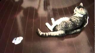 はぐれメタルも響かない猫