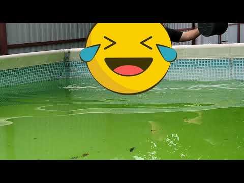 Как очистить воду в бассейне на даче без химии. Уход за бассейном INTEX