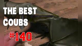 Best COUB #140 - HOT WEEKS VIDEOS