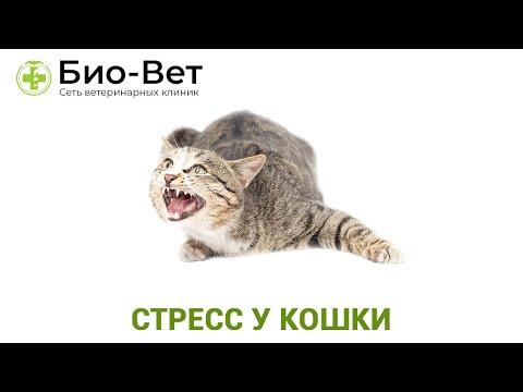 Стресс у Кошки 🙀 - Симптомы и Лечение // Сеть Ветклиник БИО-ВЕТ