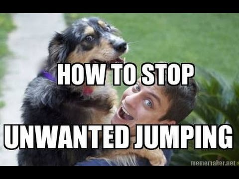 How To Train Your DOG NOT To JUMP