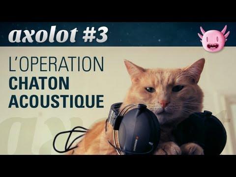 Operace Akustická kočka a další kočičí příběhy