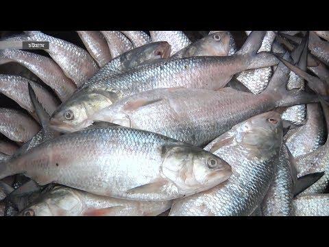 চট্টগ্রামে ট্রলার থেকে নামছে টনকে টন ইলিশ!  | Hilsa fish in bangladesh | Somoy TV