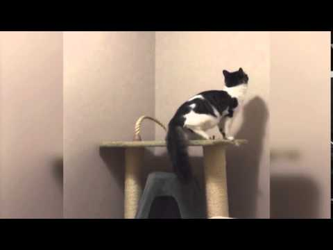 Youtube Cat Jumps As Toast Pops Up