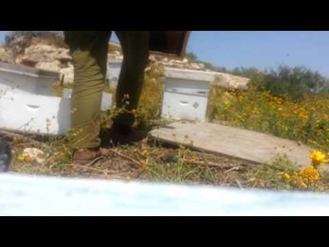 Пчеловодство. Первый отбор мёда 2016