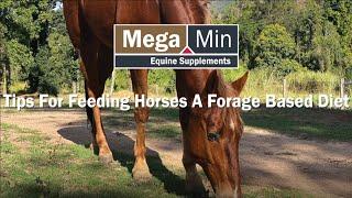Tips for Hay Feeding to Horses