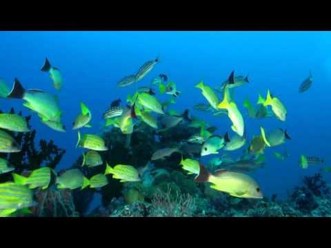 Andamanen, Andamanen Inseln,Indien