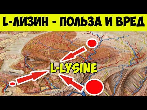 L-лизин - что это и Для чего? Л - Лизин польза и вред. В каких продуктах содержится l - Лизин