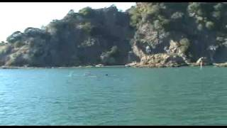 preview picture of video 'Bottlenose Dolphins in Whakatane Harbour Entrance'