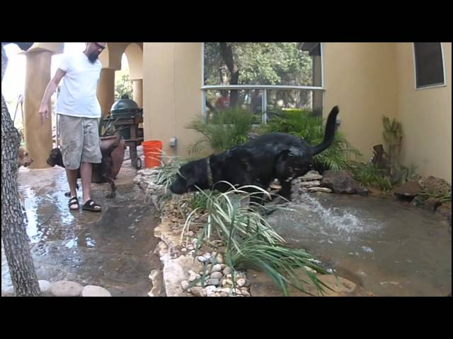 Dog Splash Pond installation Austin Texas * Final Pics and Alterations *by GoProPonds.com