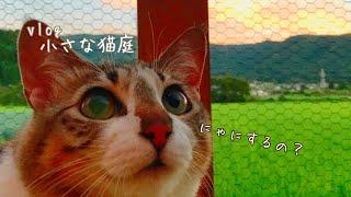 【猫庭DIY】芝生と固まる土とレンガ使うよ!!