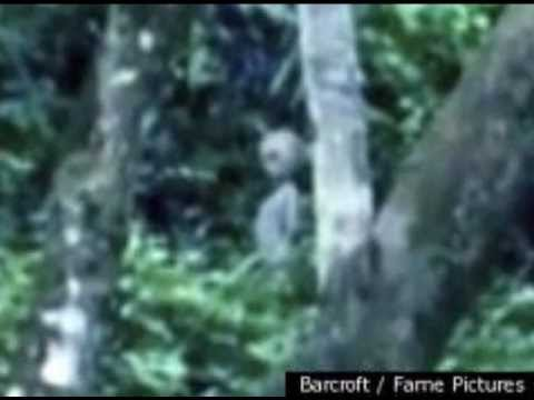 Alien caught on tape (mexico 2011)