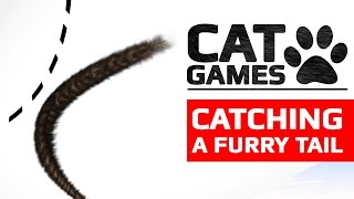 CAT GAMES - 😺 CATCHING A BLACK TAIL (ENTERTAINMENT VIDEOS FOR CATS TO WATCH)