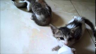 Me feeding Eric and Sara kitty (+ Tips to look after Kittens in the description)