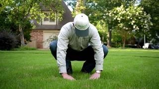 Fall Lawn Care to Prepare for Winter | Aeration, Fertilizing and Weed Control  | TruGreen