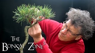 Creating A Water And Land Penjing With A Lone Pine, The Bonsai Zone, June 2018