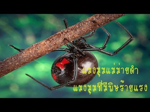 ลบแมงมุมหลอดเลือดดำในราคาขาเลเซอร์ในมอสโก