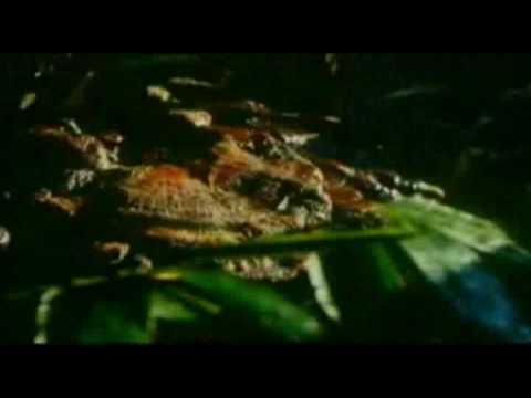 Papiloma humano y herpes