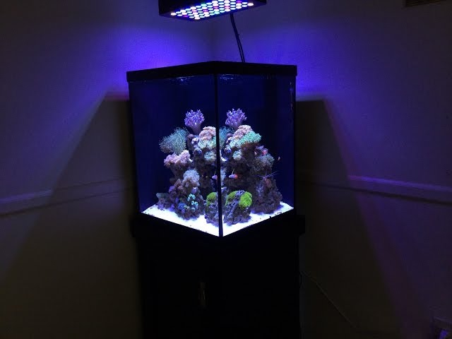 How To Start A Reef Tank Marineland 37 gallon Cube: Reef Build