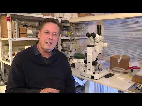 Jeroen de Rond verzorgt lezing over wilde bijen bij IVN in De Aquamarijn
