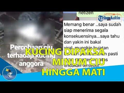KUCING DIPAKSA MINUM CIU HINGGA MATI