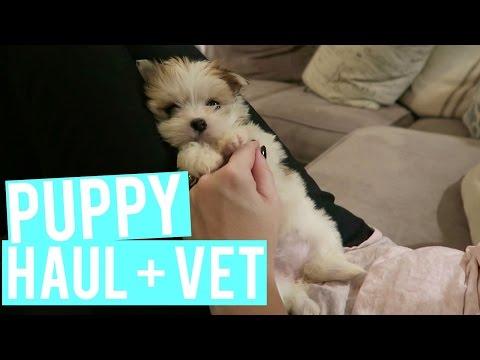 Puppy Haul And Setup
