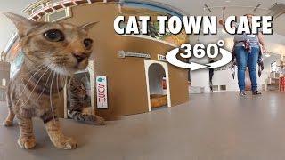 Cat Town Cafe (360° 4K VR)