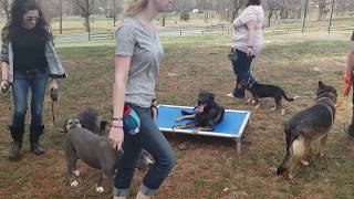 Dog Obedience Small Group Training: Working For Neutrality And Clarity.