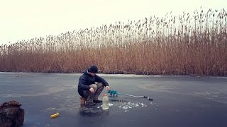 Живец на жерлицу зимой