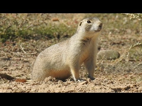 Prarie Dog Hunt Colorado Western Slope