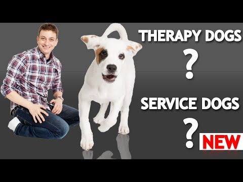 What's The Difference Between a Service Dog, Therapy Dog, and an ...