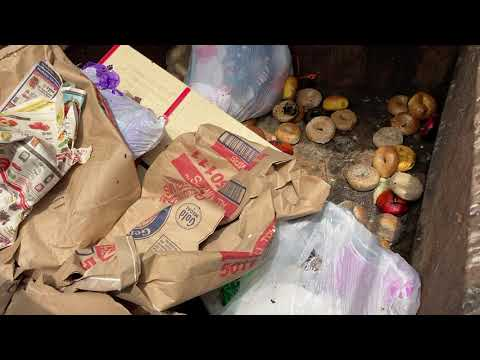 Dirty Dumpster Causes Fly Infestation in...