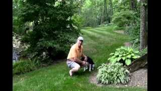 Best ways to stop deer from eating your plants