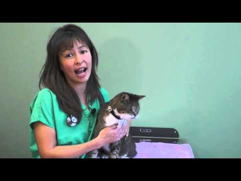 krtube how to use an asthma inhaler in your cat dr justine lee
