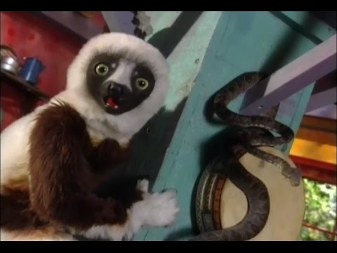 Zoboomafoo | Full Episode: Elephant Trunk Trivia | Animals