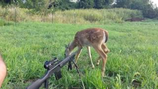Best Hunting/Gun Fails Compilation