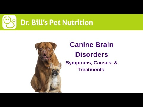 Video Brain Disorders in Dogs