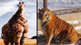 5 जानवर जो मोटापे के शिकार हो गए। Top 5 Fattest Animals Ever Seen.