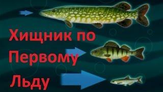 Диалоги о рыбалки окунь зима