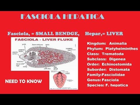 Parazita betegség
