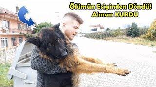 Aç Susuz Bırakılp Ölüme Terkedilen Yeni Köpeğim - ALMAN KURDU