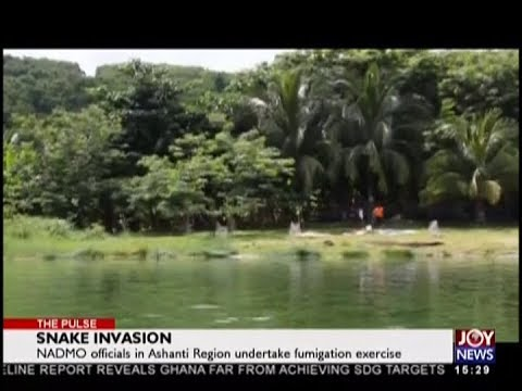 Snake Invasion   The Pulse on JoyNews 7 9 18